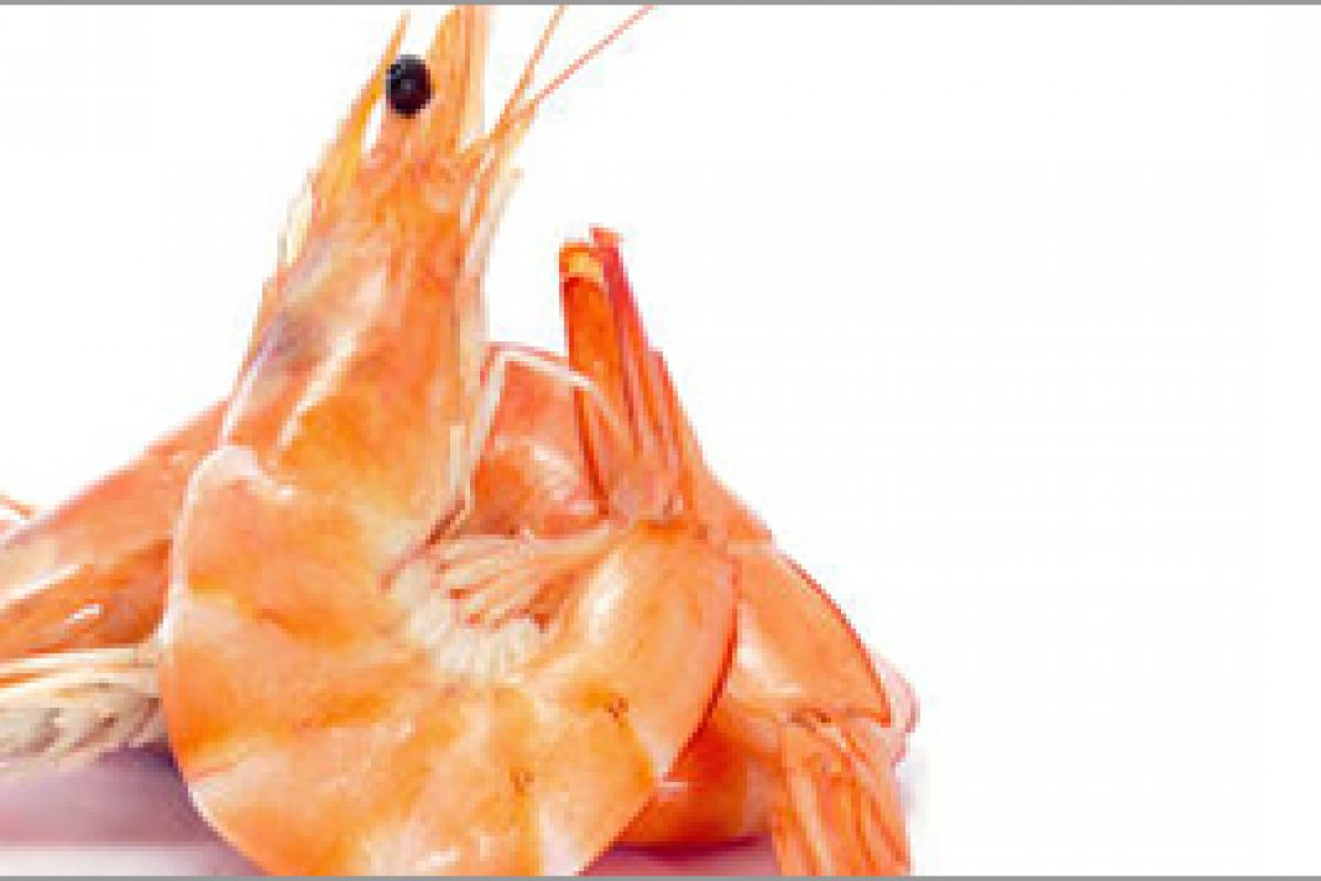 Cooked Prawns – Hong Seafood | Leading frozen seafood supplier in